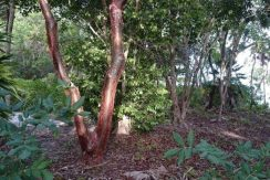 0.39 Acres at Pine Point - view inland