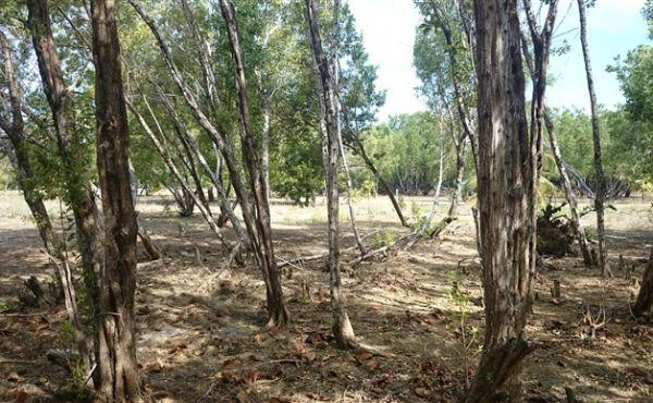 0.45 Acre at Little Bight - view to rear