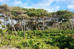 0.62 acres at Little Bight (Lot #14) - view inland