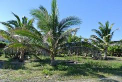 0.351 0.351 Acre Beachfront at Trade Wind - View to ocean