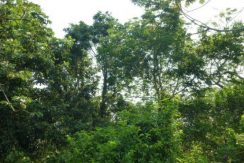4.8 Acres at Swanix Ridge - mature trees