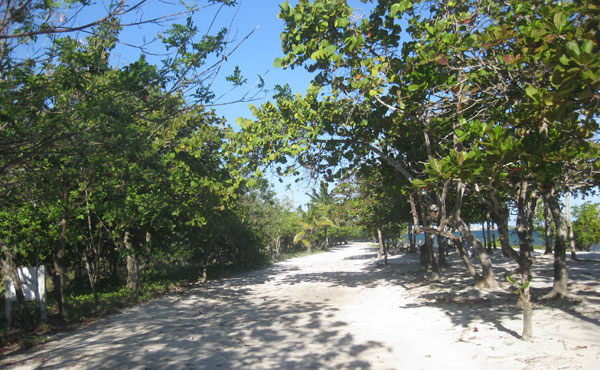 Blue Bayou - view along road