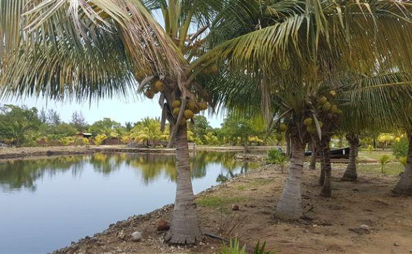 0.15 Acres Canal front at Coconut Cove with Covered Boat Slip
