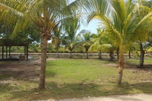 0.15 Acres at Coconut Cove (4)