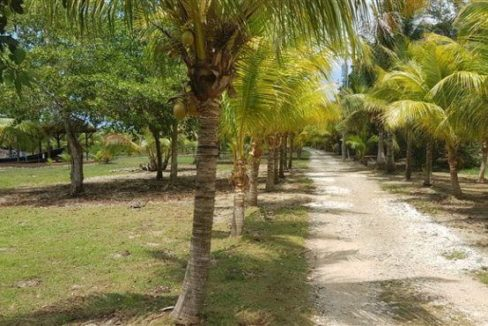0.15 Acres at Coconut Cove (6)