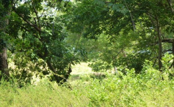 0.28 Acre Residential Lot at Bambu (1)