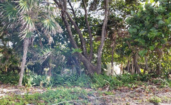 0.298 Acre Lot at Coral Beach Village (3)