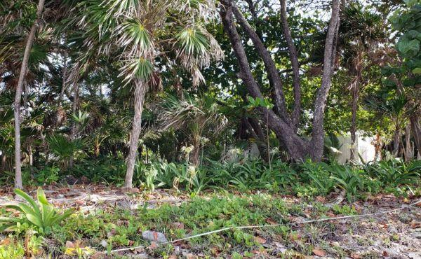 0.298 Acre Lot at Coral Beach Village (4)