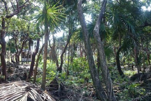 0.32 Acres at Swanix Bay (2)