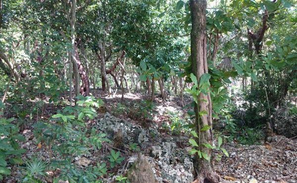 0.32 Acres at Swanix Bay (3)