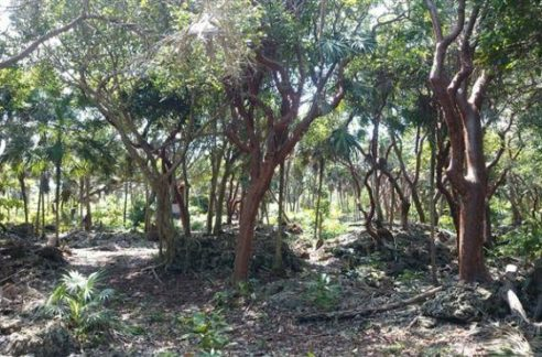 0.63 Acres at Swanix Bay (1)