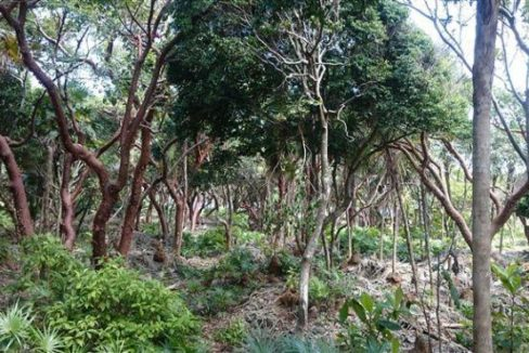 0.63 Acres at Swanix Bay (2)