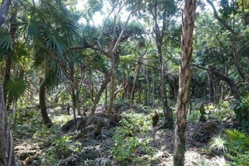 0.63 Acres at Swanix Bay (3)