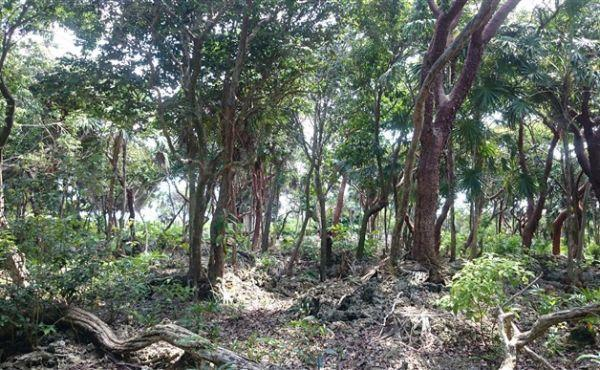 0.63 Acres at Swanix Bay (4)