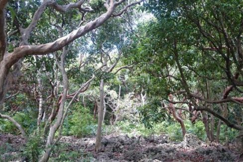 0.63 Acres at Swanix Bay (5)