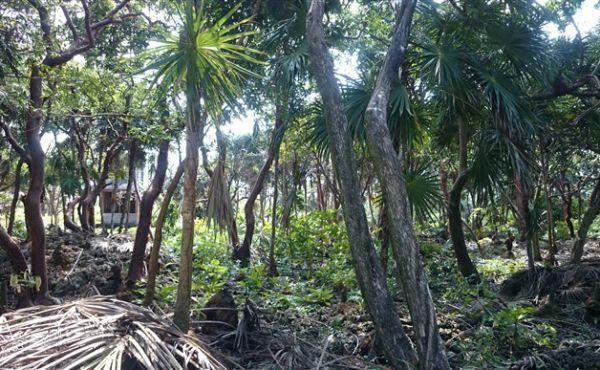 0.63 Acres at Swanix Bay (6)