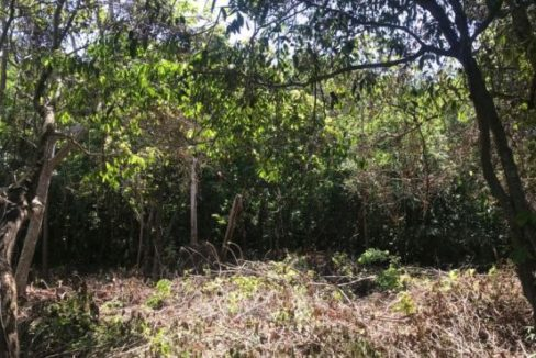 REMU0488 - 0.23 Acres at Swanix Ridge (3)