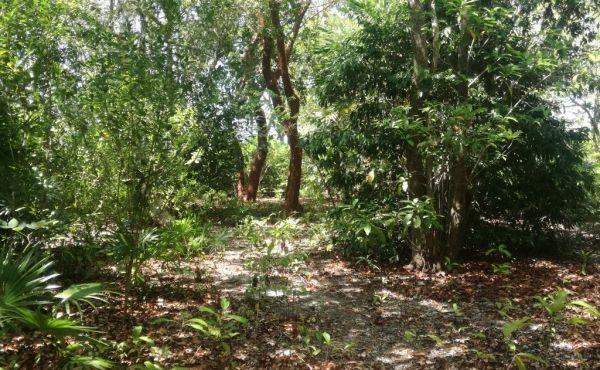 0.39 Acres at Pine Point - Photo 7