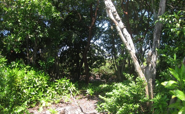 0.216 Acre at Pine Point (Photo 6)